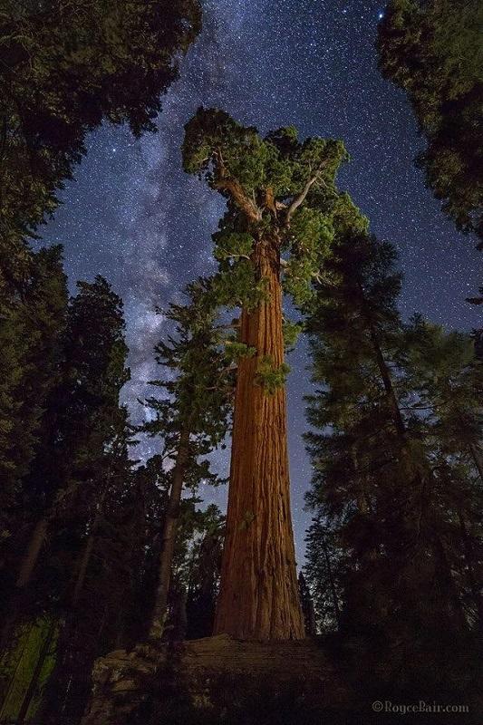 은하수와 거대한 세쿼이아.jpg