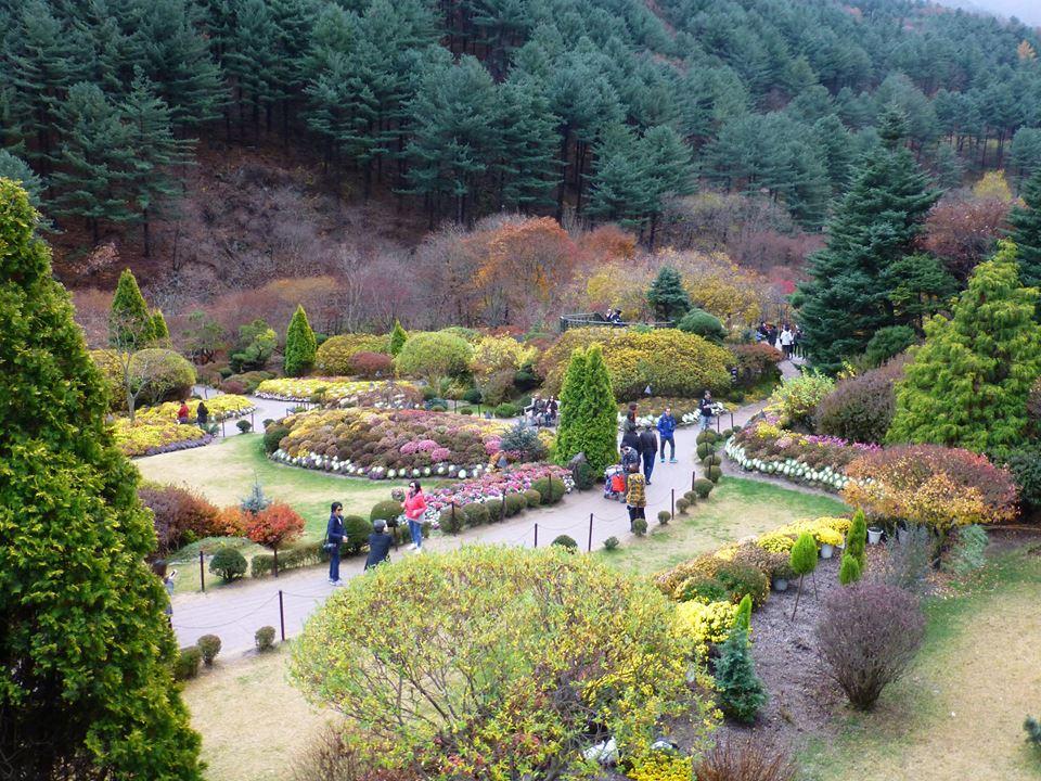 가을의 아침고요수목원.jpg