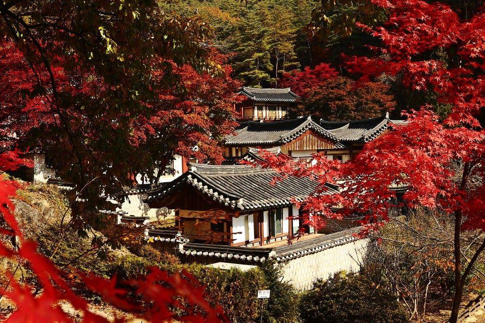 가을의 도산서원.jpg