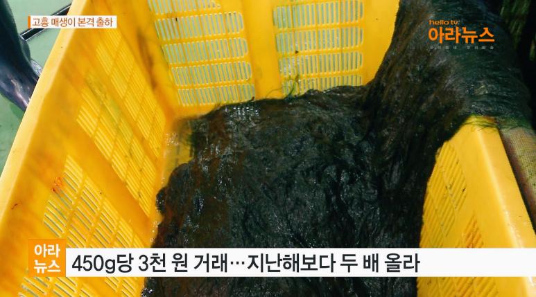 아라뉴스_월포매생이5.jpg
