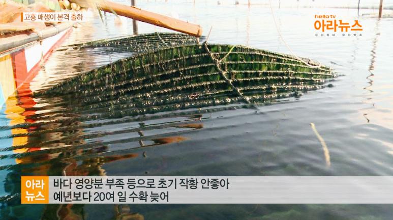 아라뉴스_월포매생이3.jpg