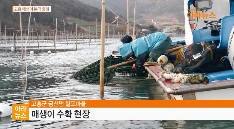 아라뉴스_월포매생이2.jpg