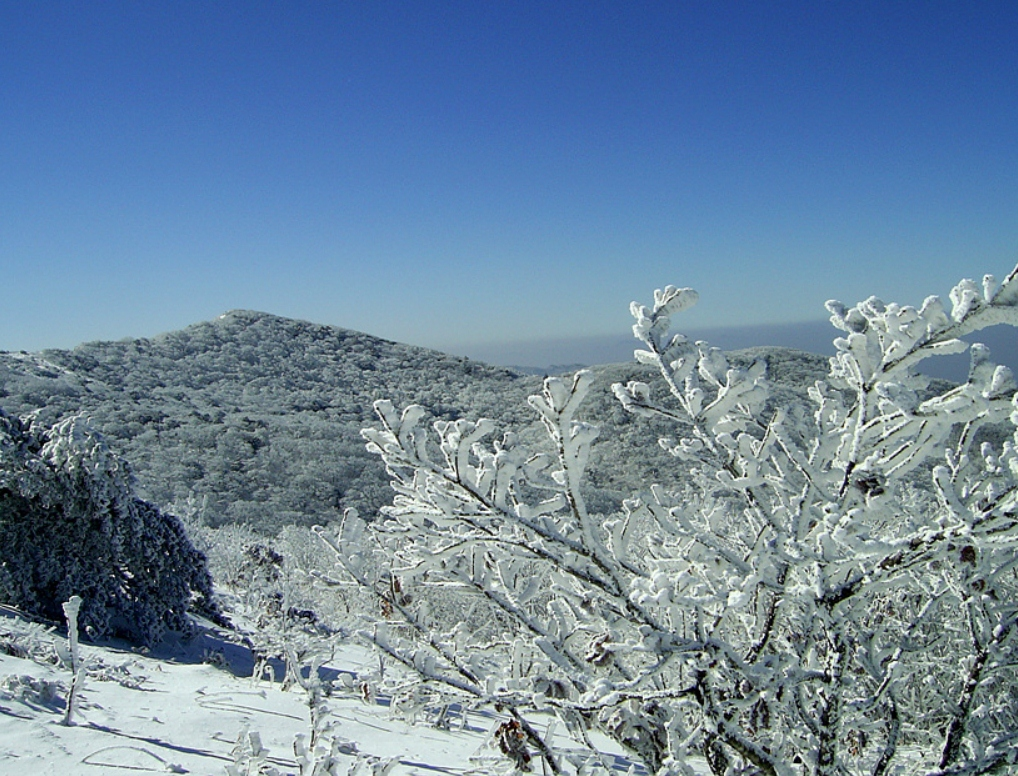 小白山 의 雪景16.jpg
