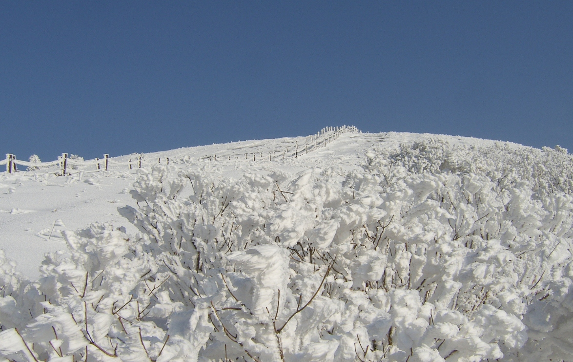 小白山 의 雪景13.jpg