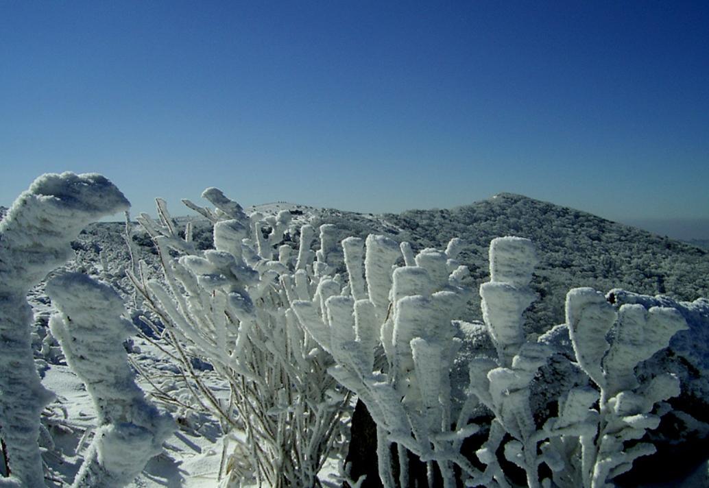 小白山 의 雪景18.jpg