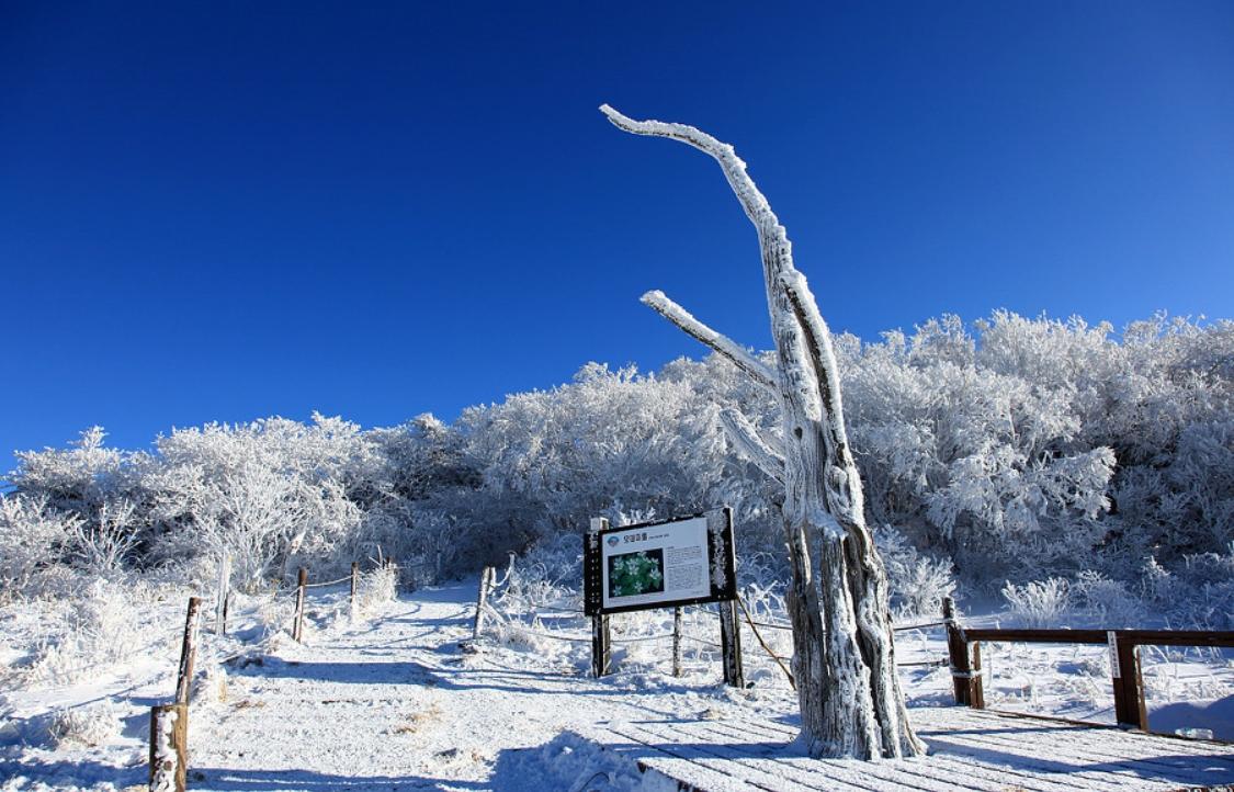 小白山 의 雪景21.jpg