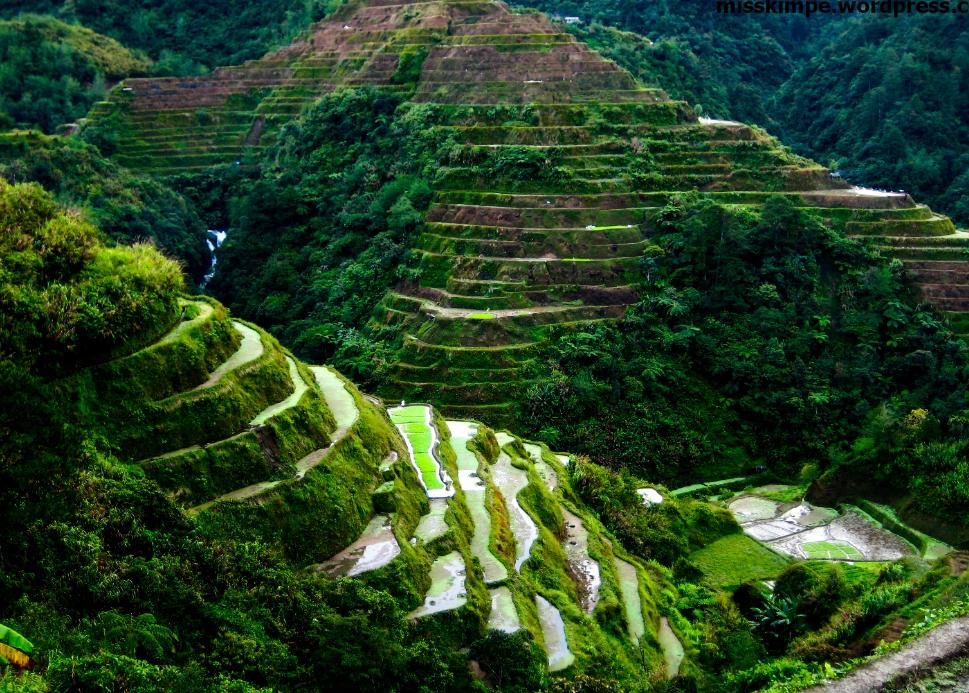 필리핀 루손섬 이푸가오주 계단논19.jpg
