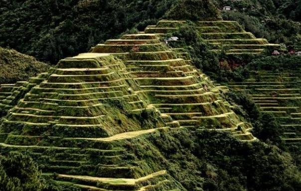 필리핀 루손섬 이푸가오주 계단논1.jpg