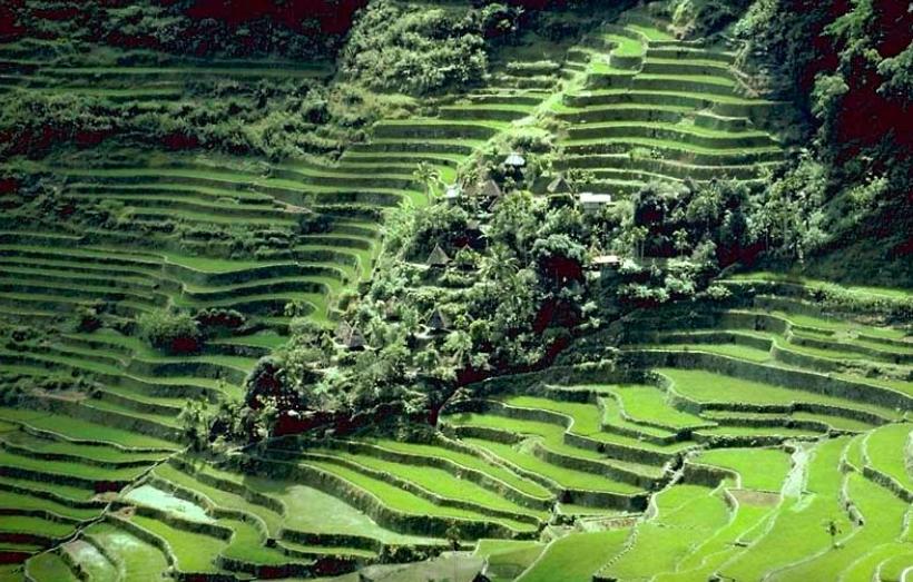 필리핀 루손섬 이푸가오주 계단논14.jpg