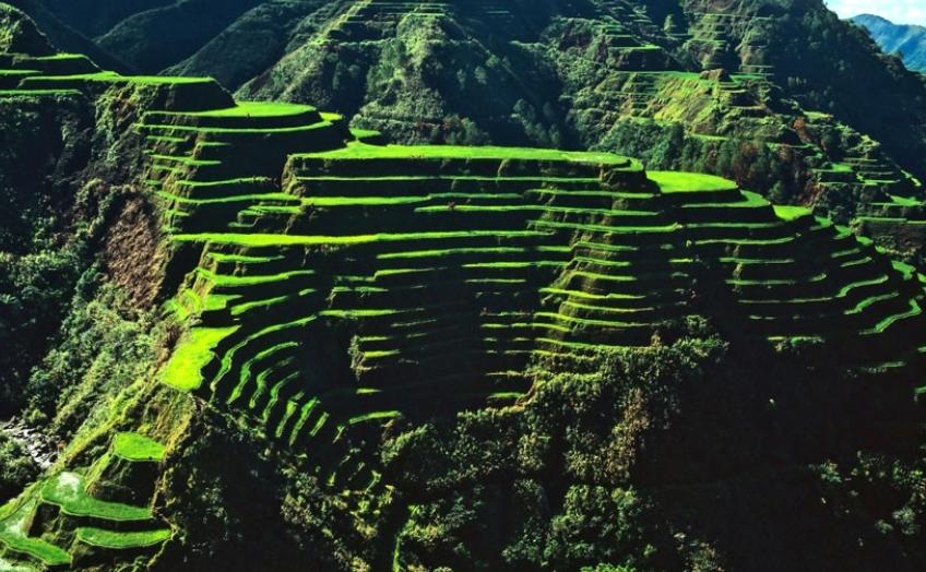 필리핀 루손섬 이푸가오주 계단논16.jpg