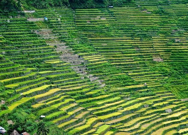 필리핀 루손섬 이푸가오주 계단논11.jpg