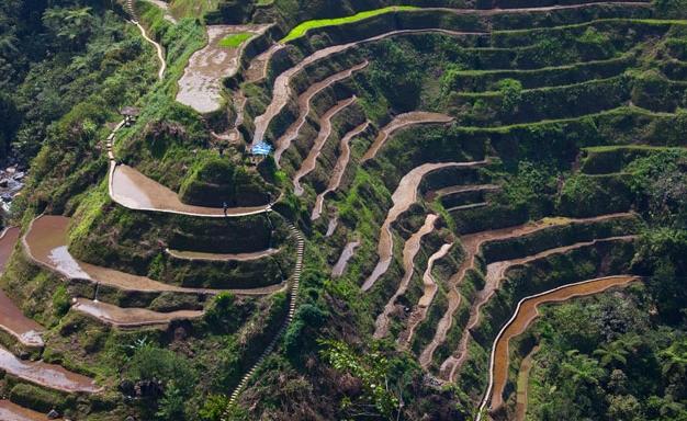 필리핀 루손섬 이푸가오주 계단논27.jpg