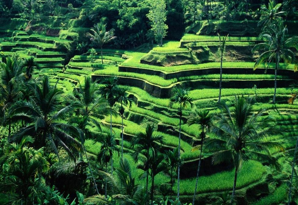 필리핀 루손섬 이푸가오주 계단논23.jpg