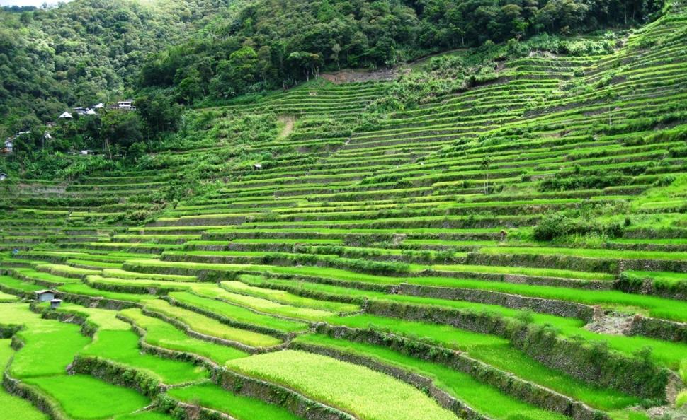 필리핀 루손섬 이푸가오주 계단논25.jpg