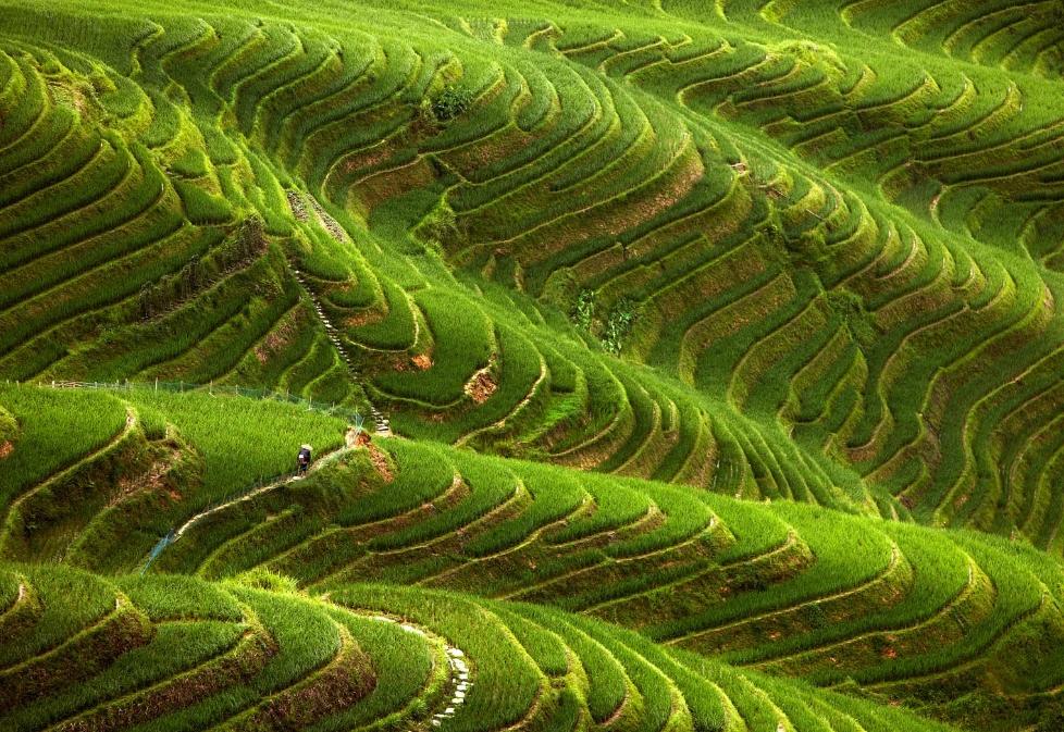 필리핀 루손섬 이푸가오주 계단논13.jpg