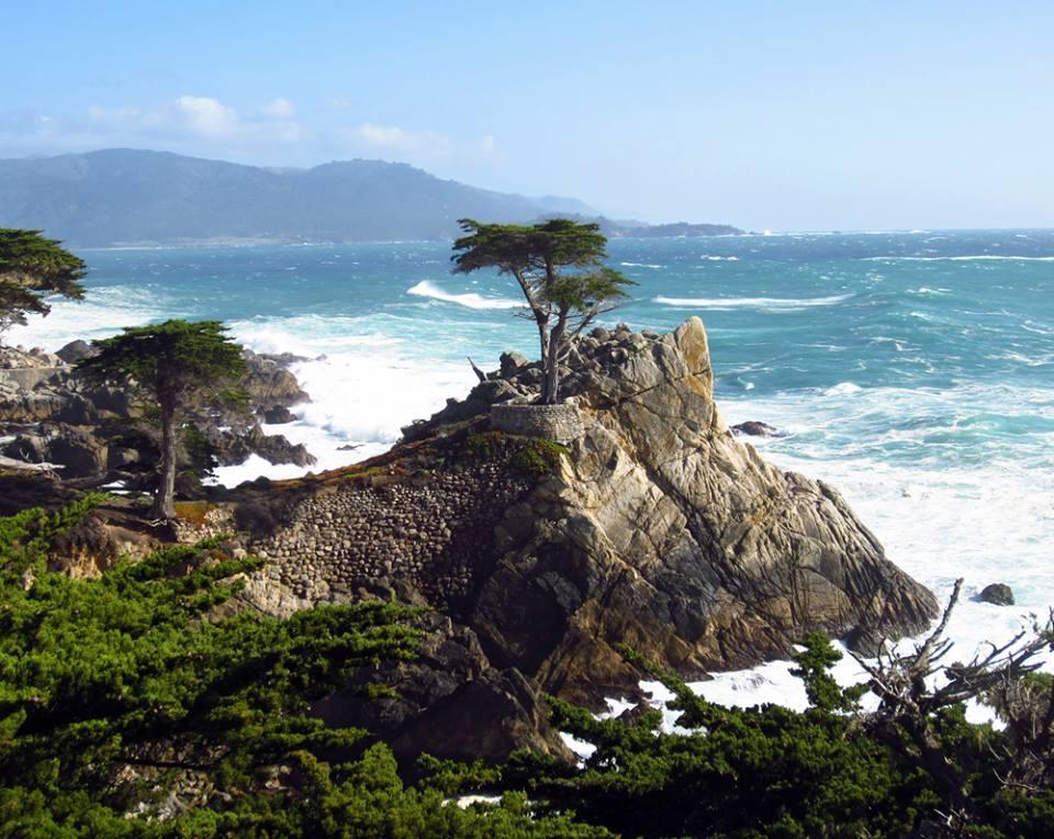 캘리포니아에서 사이프러스 나무.jpg