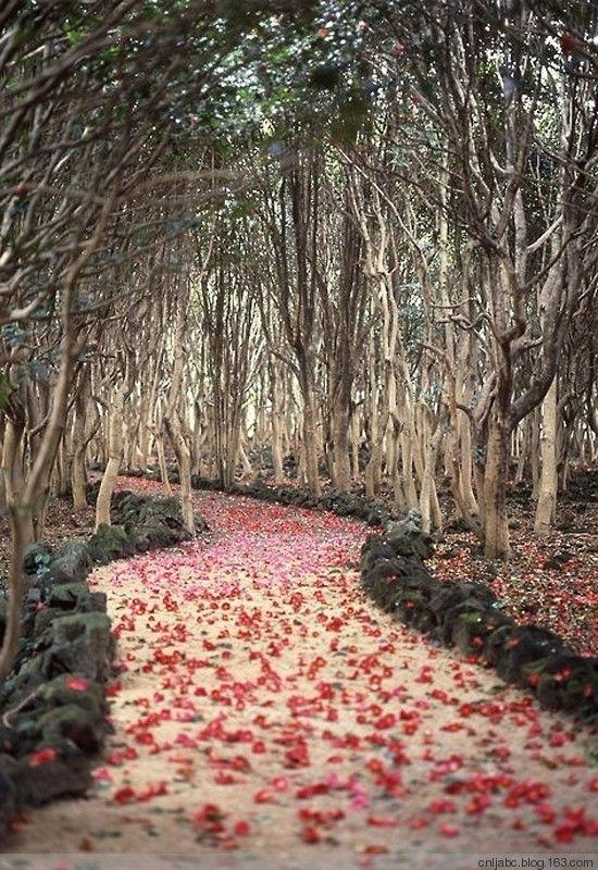 중국의 아름다운 풍경모음22.jpg