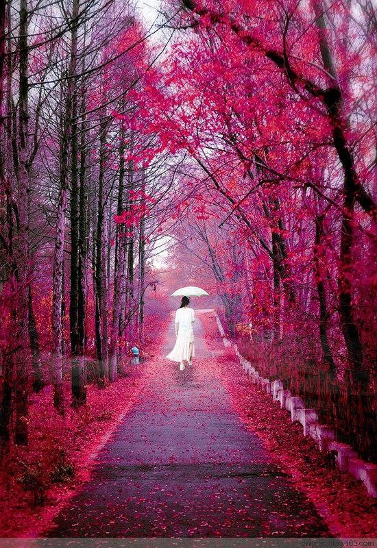 중국의 아름다운 풍경모음23.jpg