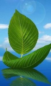 나뭇잎 (1).jpg