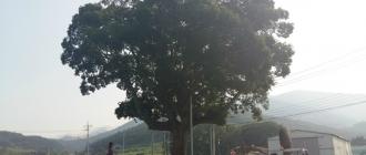 시원한  나무그늘아래 ..